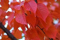 autumn colors2016/4