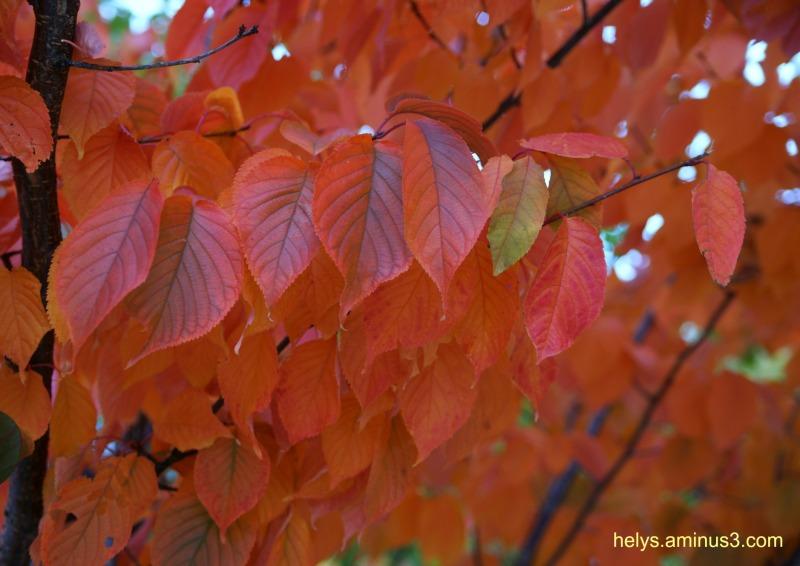 autumn colors2016/6