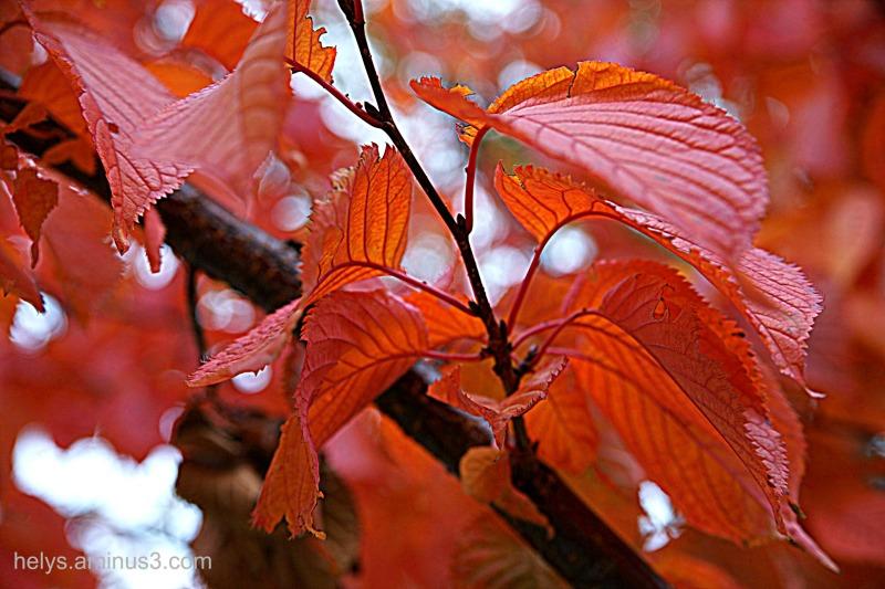 autumn colors 2016/13