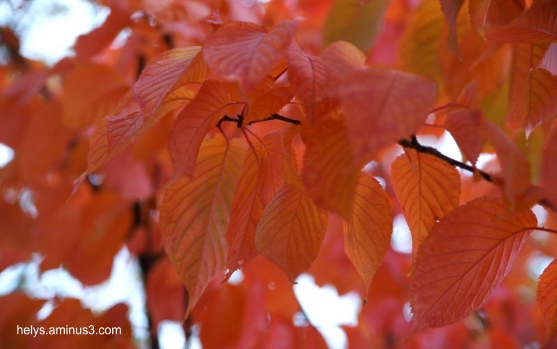 autumn colors 2016/14