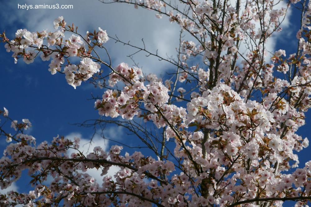 springtime6