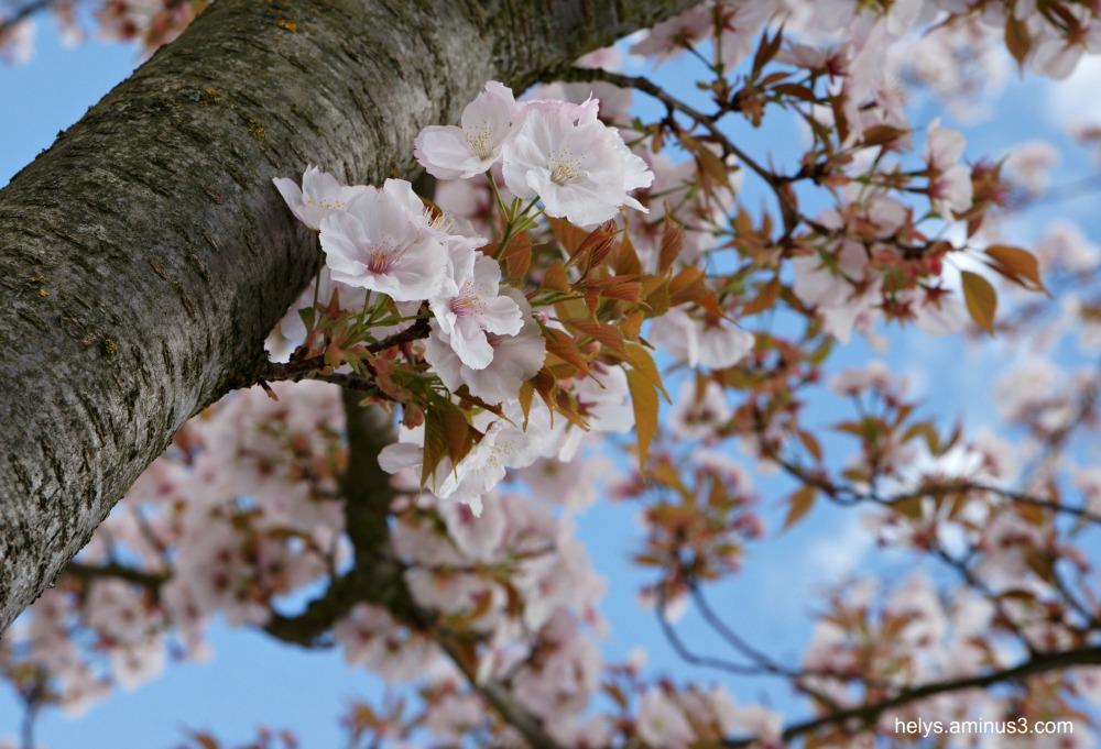 springtime8