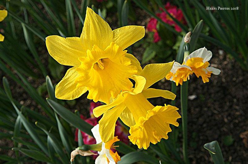 spring blossoms2