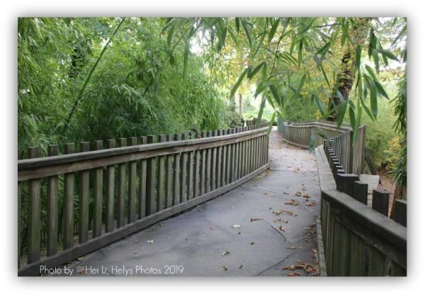 A bamboo garden
