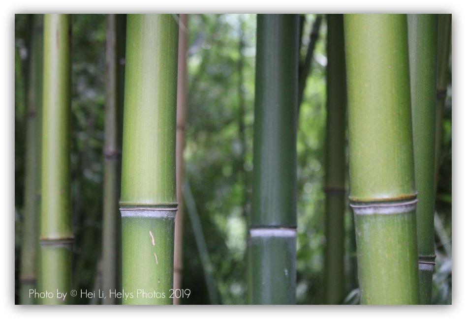 a bamboo garden2