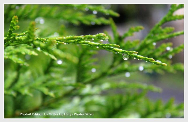 raindrops in green
