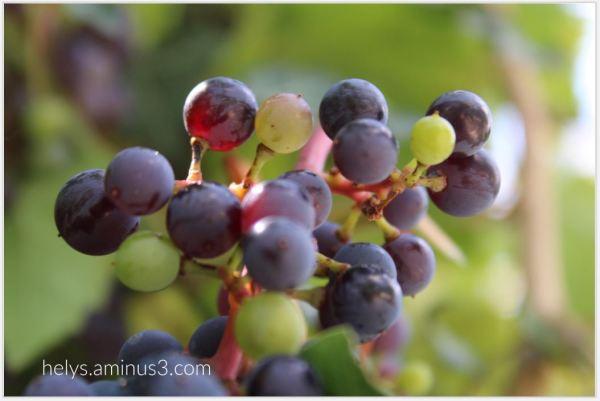 grape2