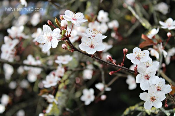 spring - let's celebrate it