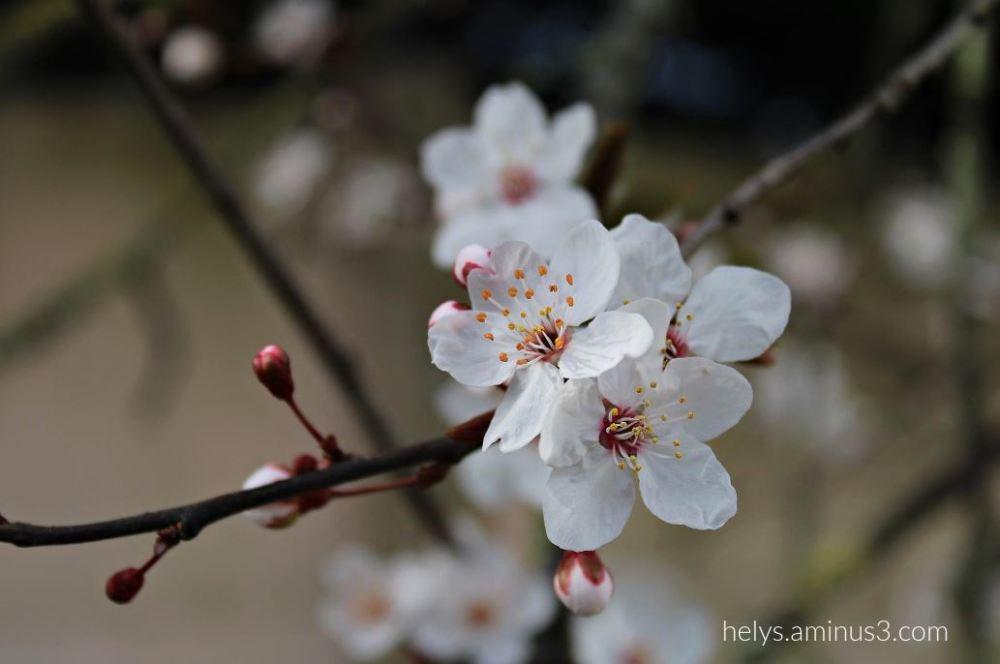 Spring - Let's celebrate it!1