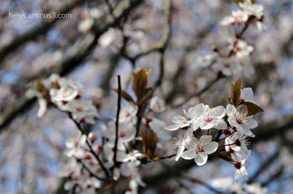 Spring - Let's celebrate it2