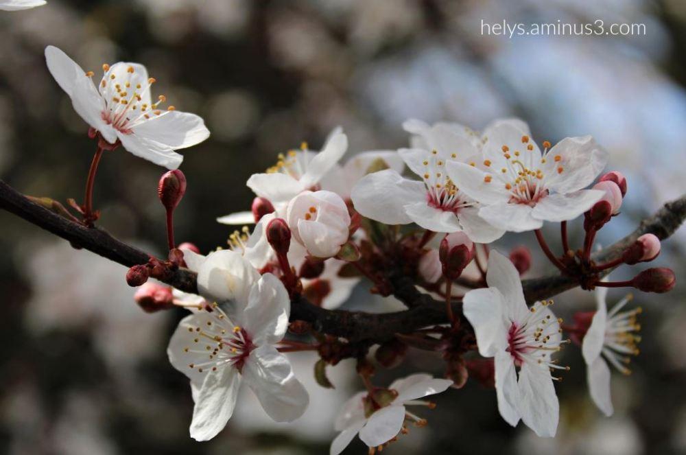 Spring - Let's celebrate it!3
