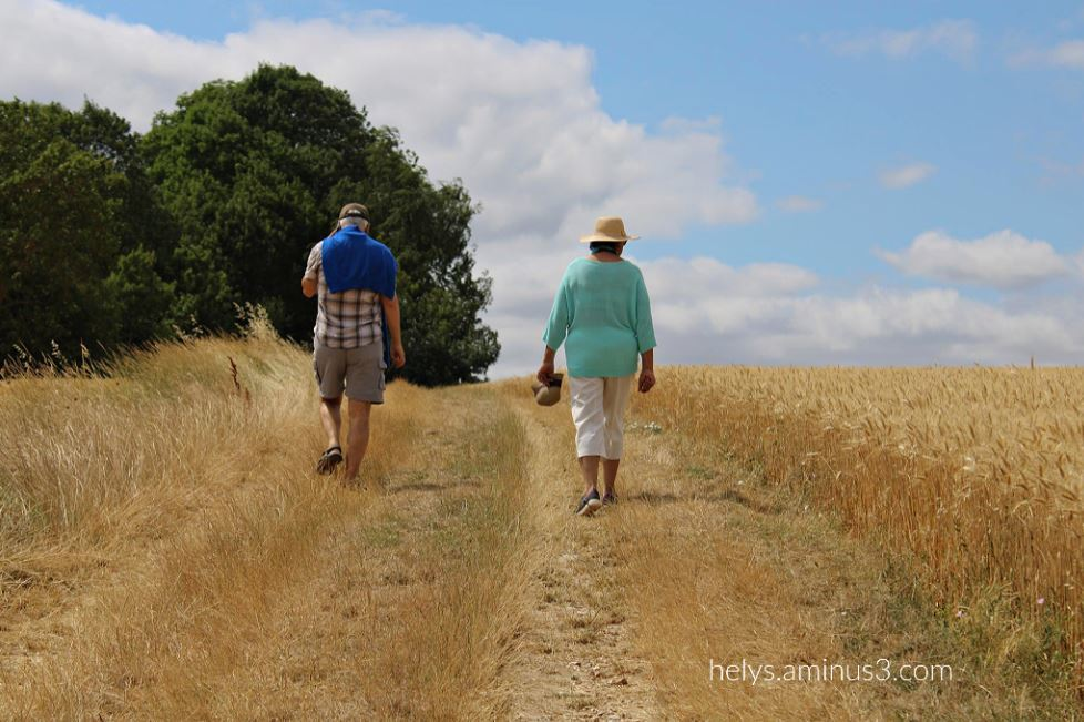 a walk in the barley fiels