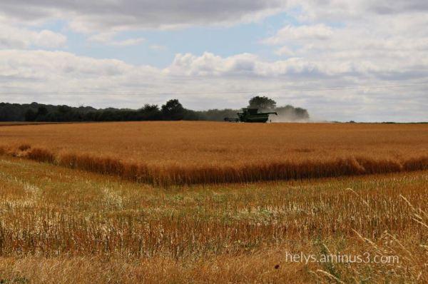 the barley fields
