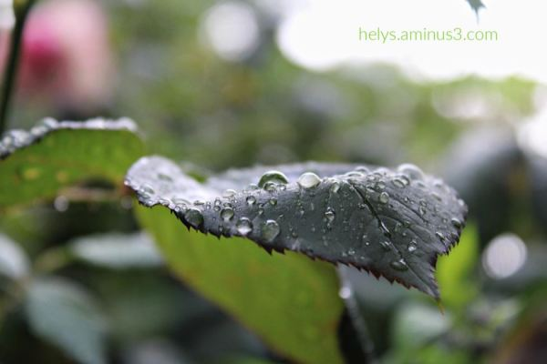 12-raindrops on leaves