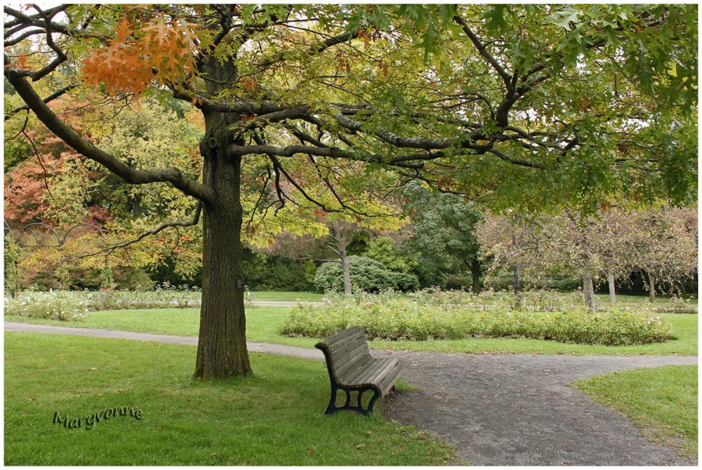 parc banc arbre