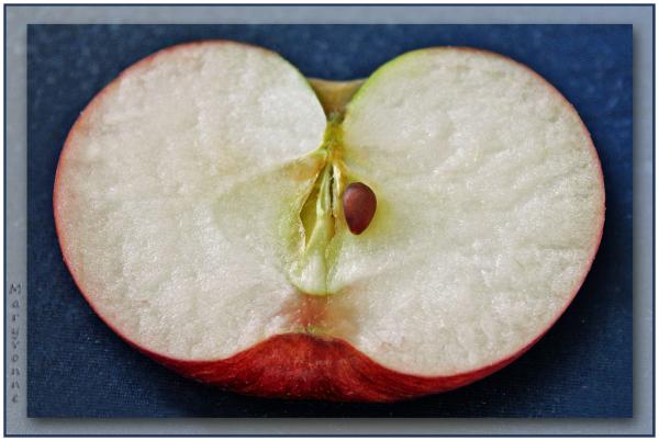 fruit pomme pépin