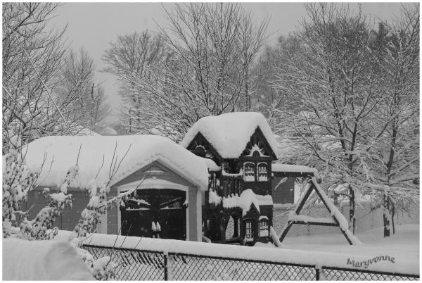 hiver neige tempête arbres
