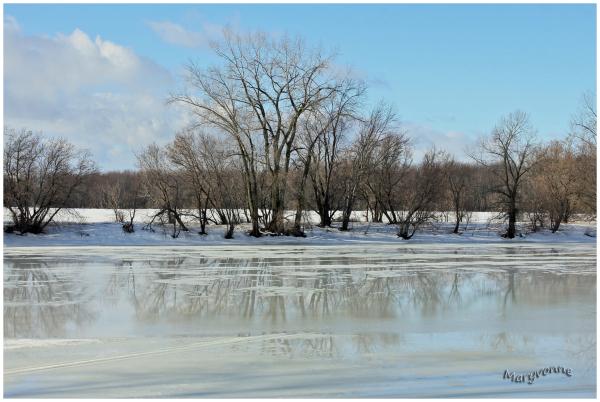 arbres reflet eau rivière hiver glace