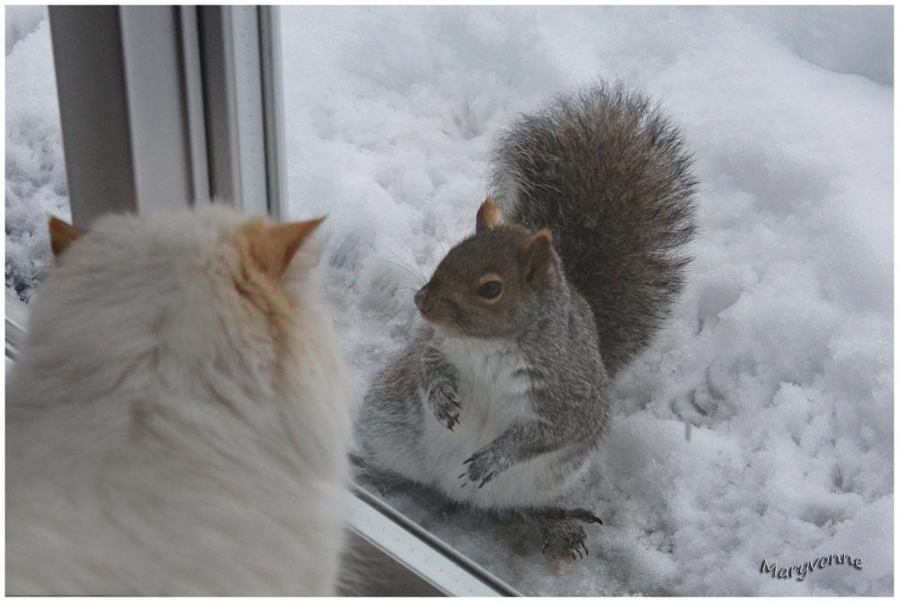 chat écureuil fenêtre hiver