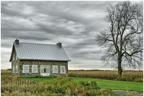 maison arbre campagne