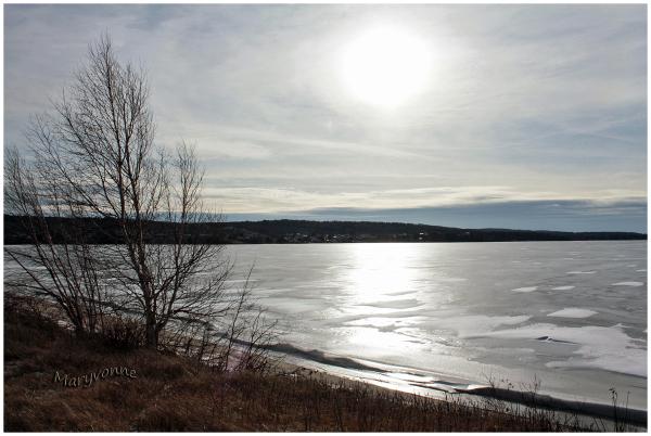 lac arbre soleil glace hiver