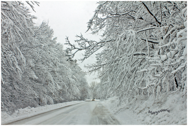 hiver neige arbres froid