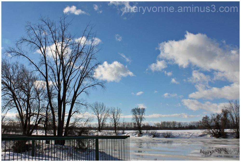 rivière eau glace arbres