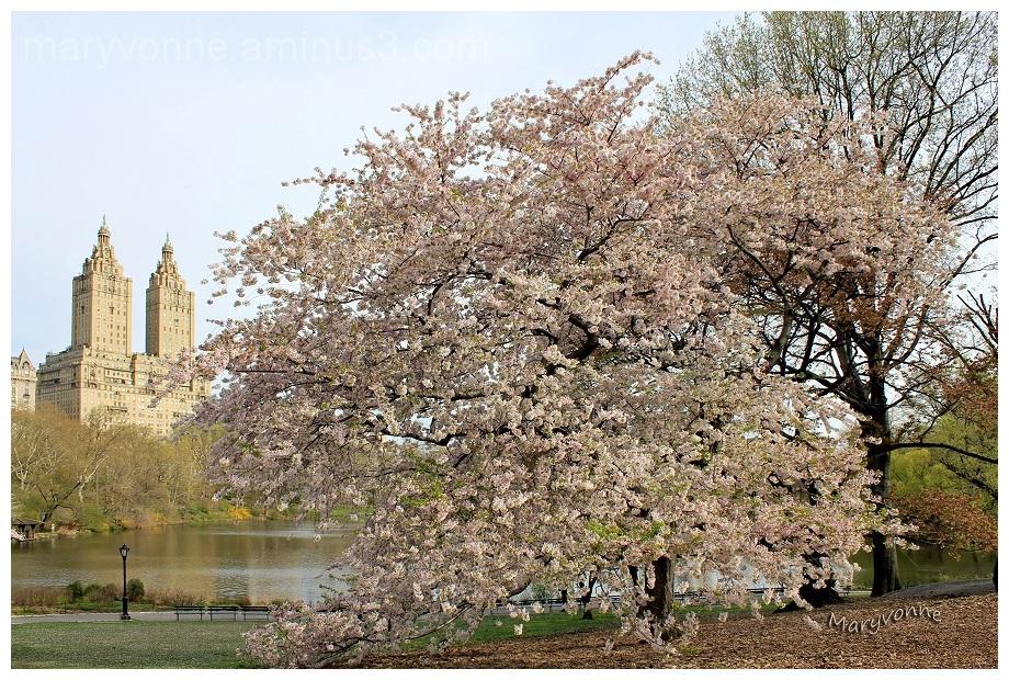parc magnolia arbres