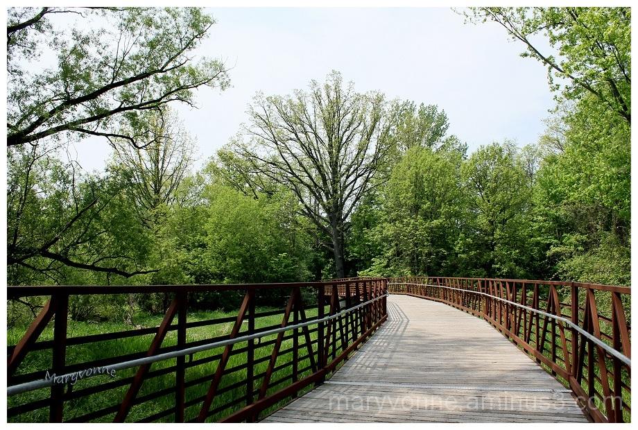 passerelle parc chemin arbre