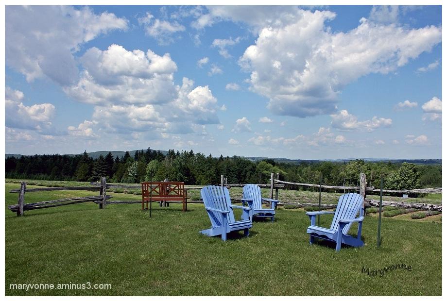 chaise jardin ciel nuage clôture arbres banc