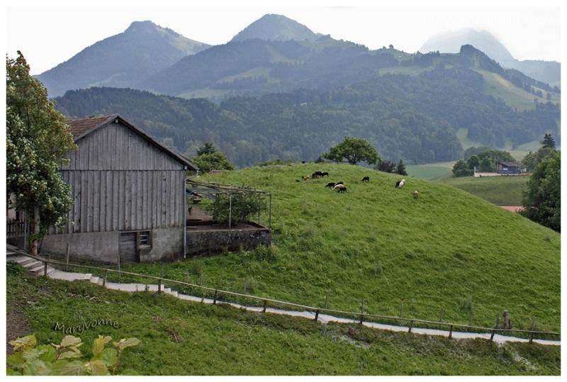 animaux  campagne montagne sentier bâtiment