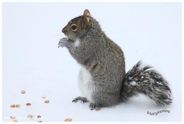 Ti-Gris sur neige