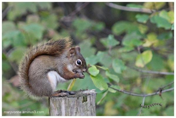 L'écureuil au parc