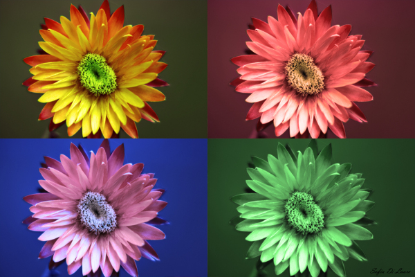 flowers in technicolor
