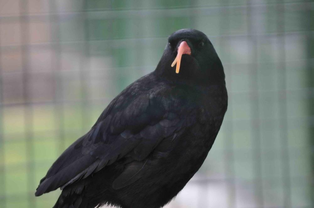 پرنده 2