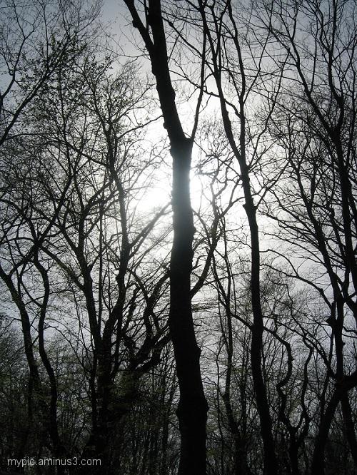 جنگل نـ ـور