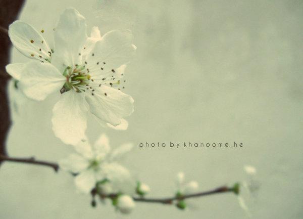 برخیز و قدح گیر ، نظر کن که بهار است