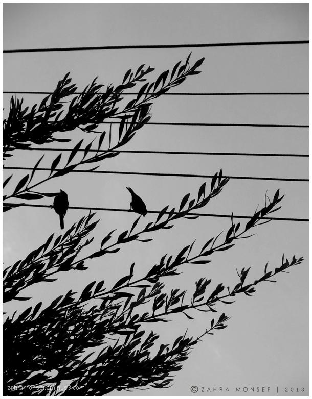 قهر زیرِ درخت صلح