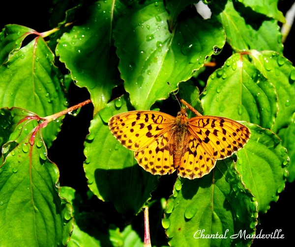 Butterfly on the leaves