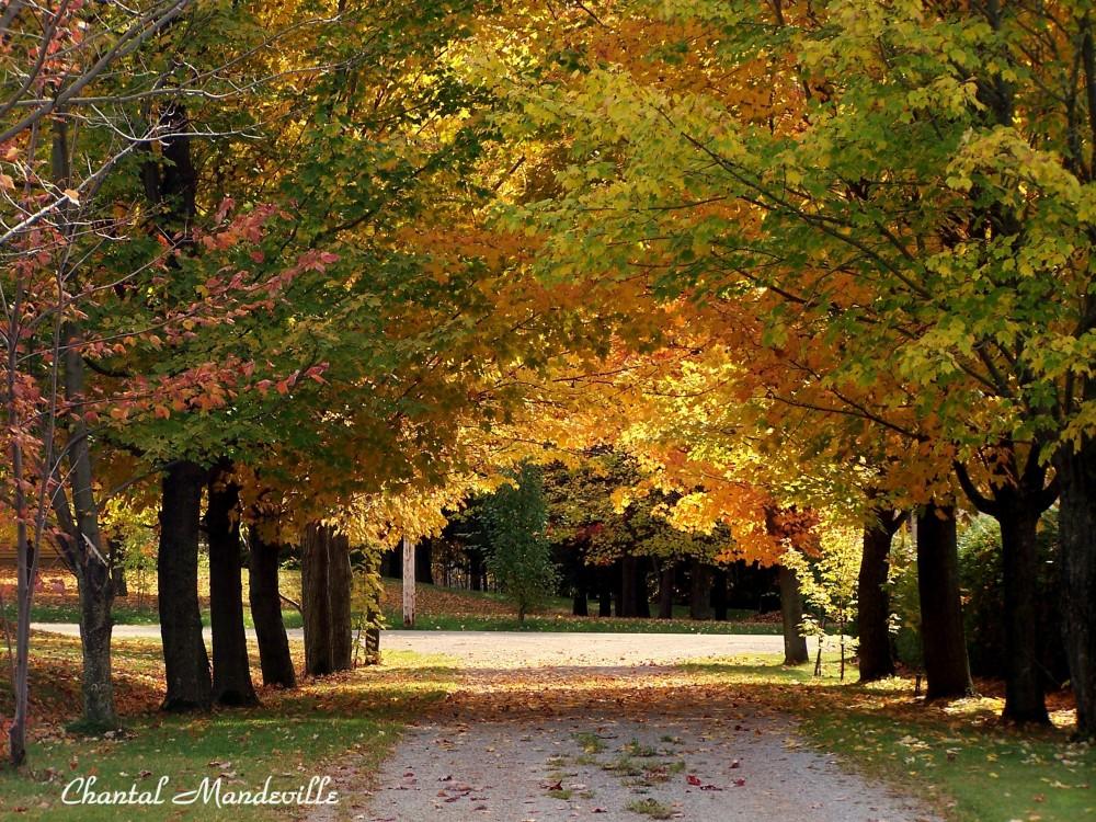 Autumn in Québec, Canada