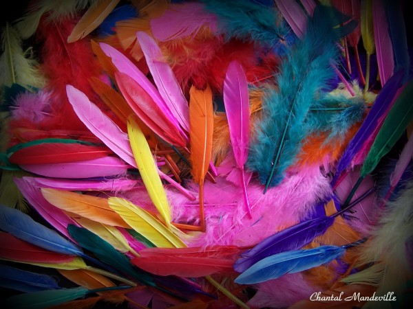 Feathers...