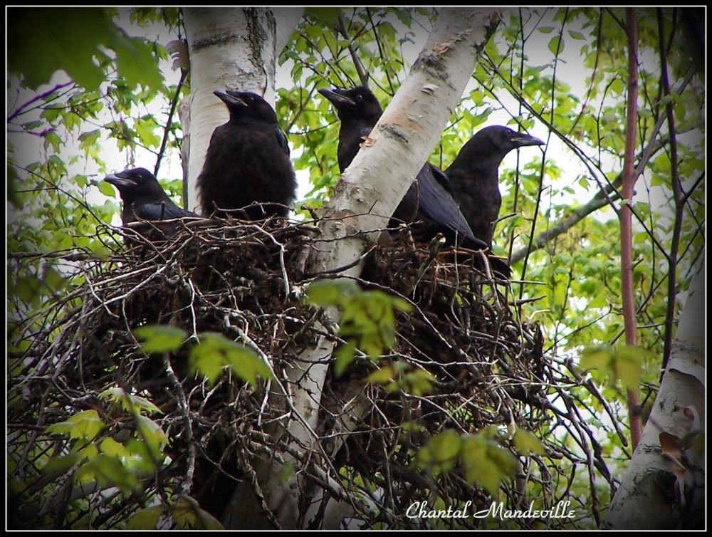Baby birds ready to fly away from home