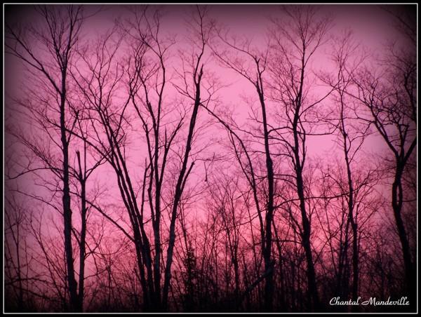 Coucher de soleil rosé