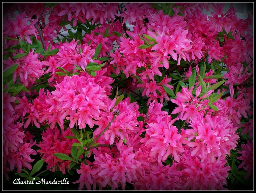 Fleurs Divers