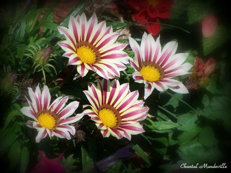 Last Flowers of Summer 1