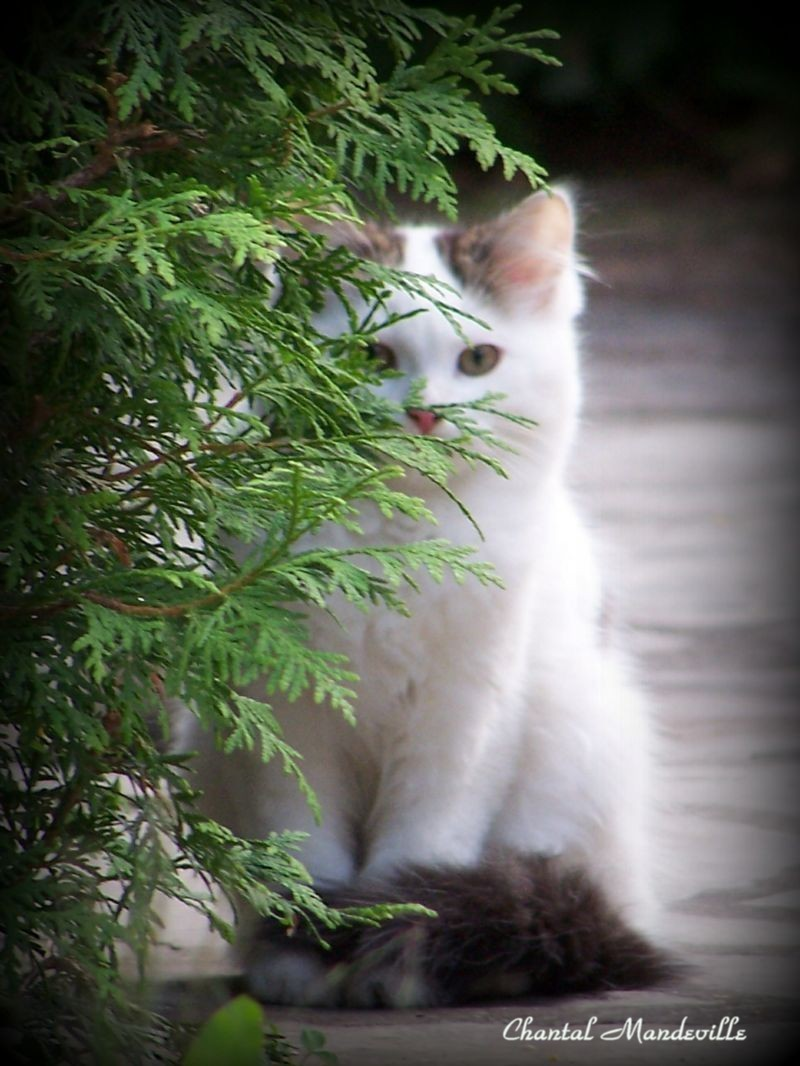 Hiding...