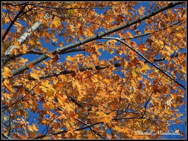 Beautiful Autumn Day