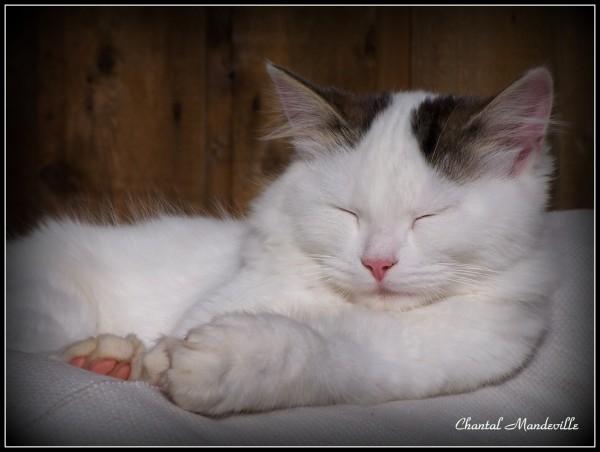Sleeping Gigi