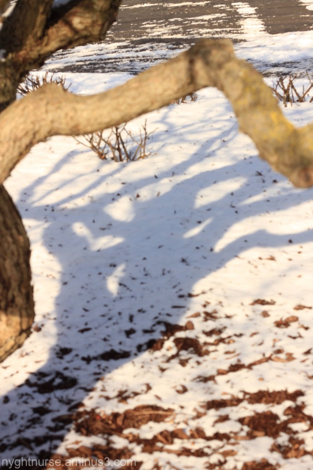 A shadow of a tree