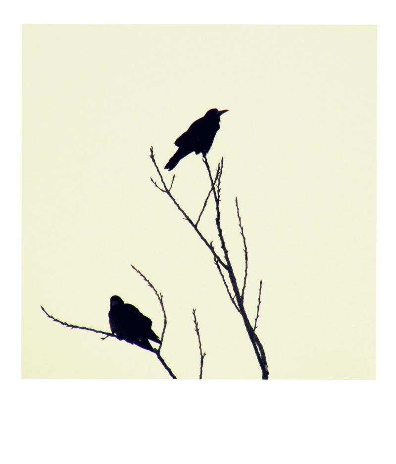 All birds.... sad  my town